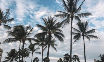 ハワイの空ヤシの木