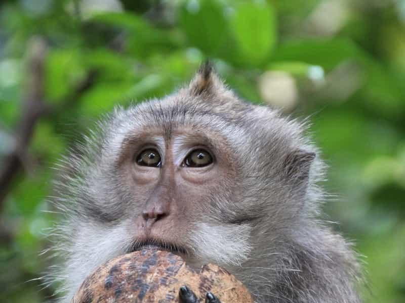 猿ココナッツ