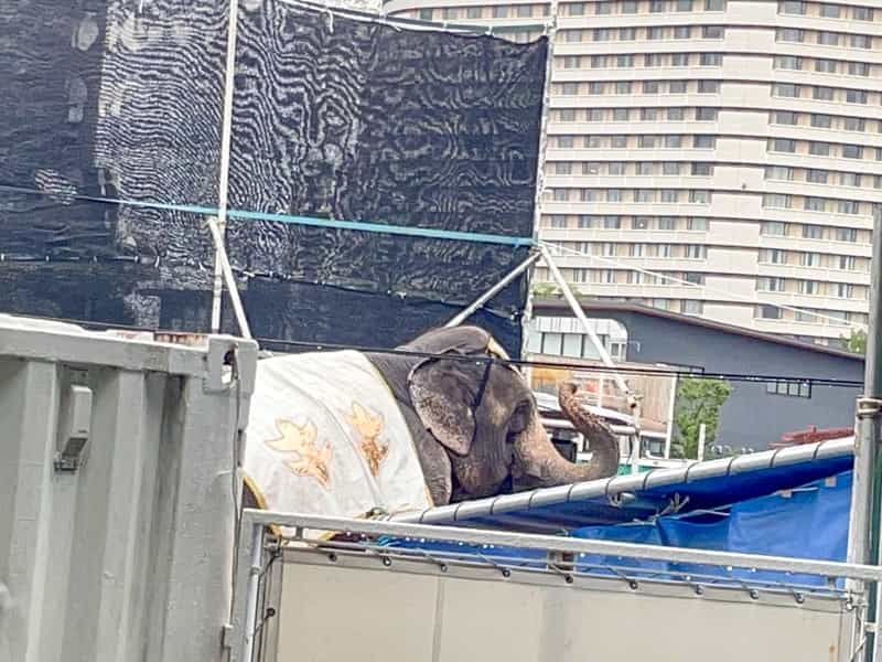 木下大サーカス 象